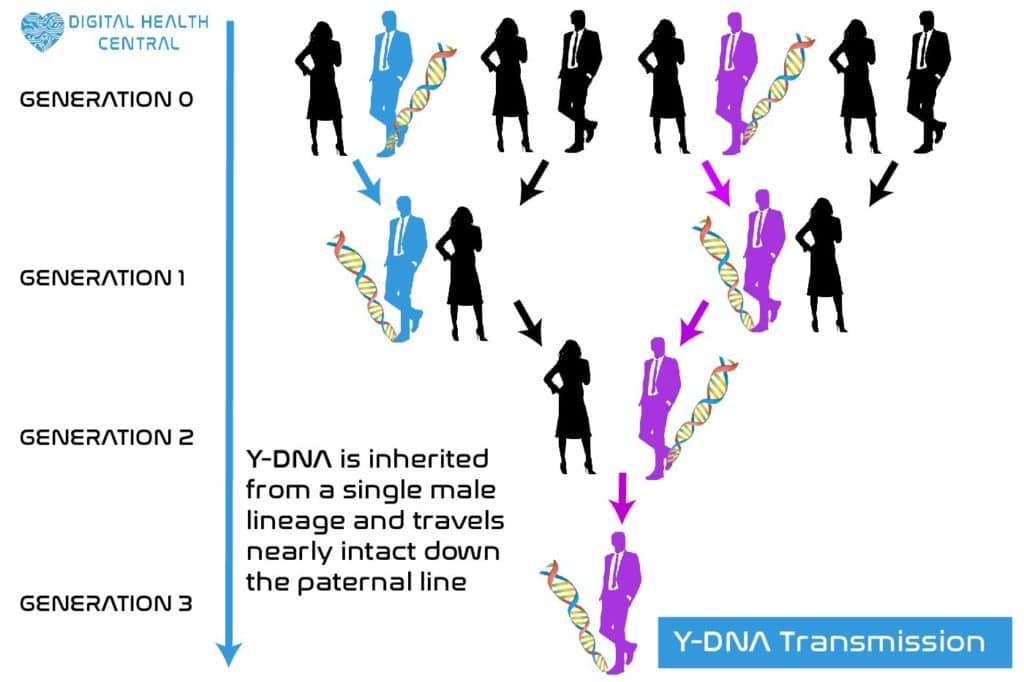 Y-DNA