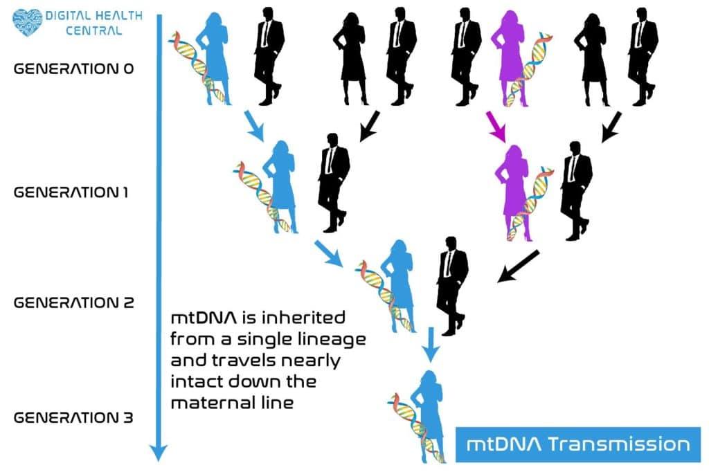 mtDNA