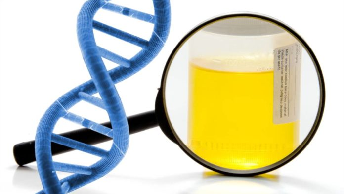 does-urine-hold-dna
